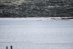 048 Norwegia Sysendammen