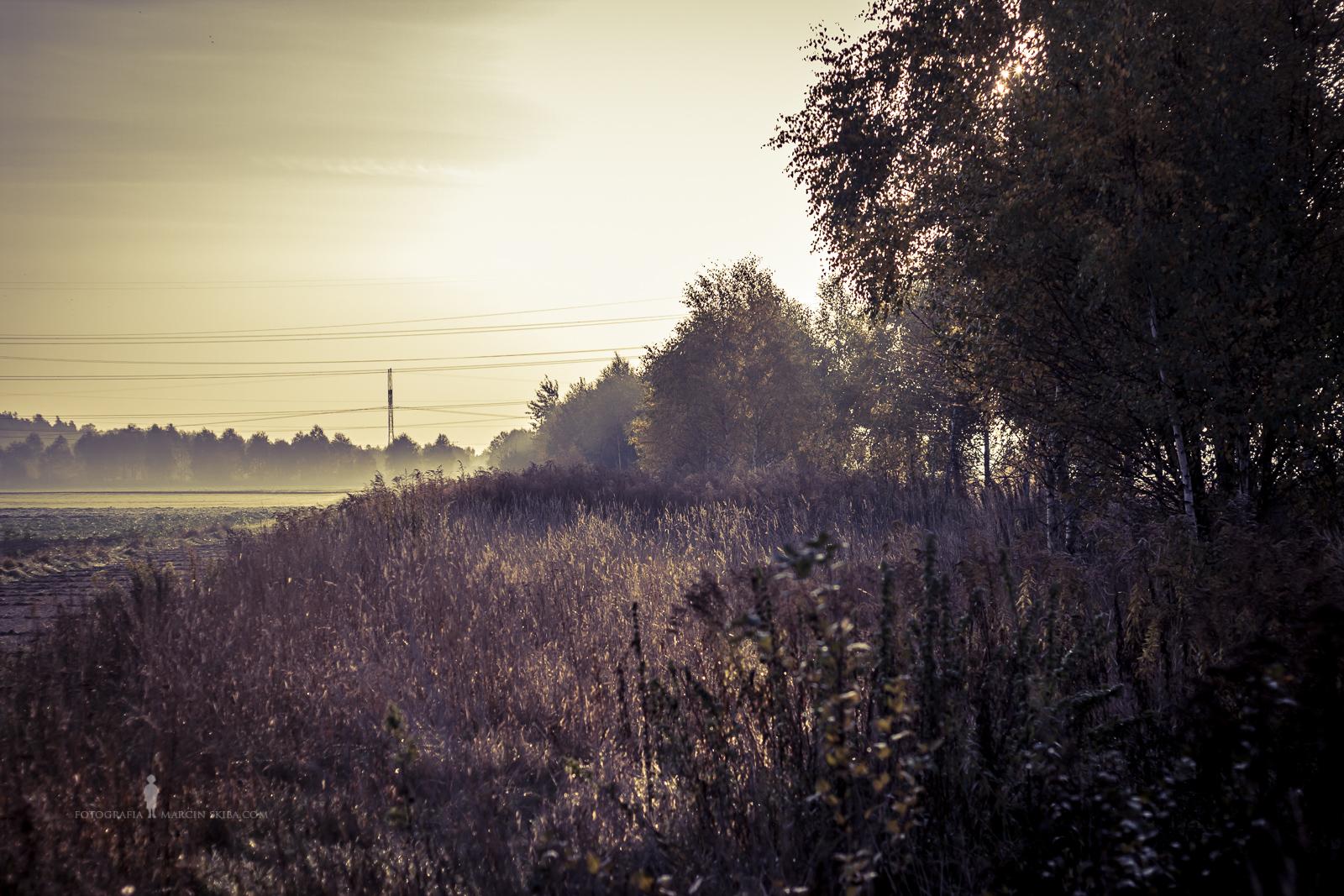 Złota Polska Jesień i jej kolory (18)