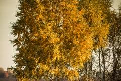 Złota Polska Jesień i jej kolory (14)