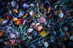 Złota Polska Jesień i jej kolory (15)