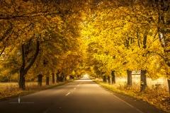 Złota Polska Jesień i jej kolory (2)