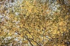 Złota Polska Jesień i jej kolory (23)