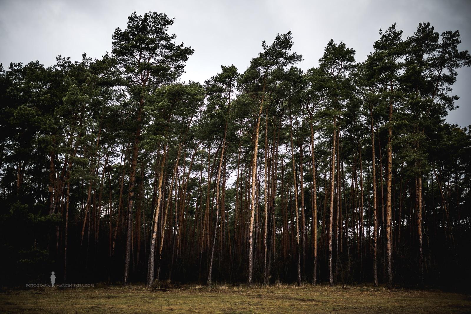 Lasy Doliny Baryczy