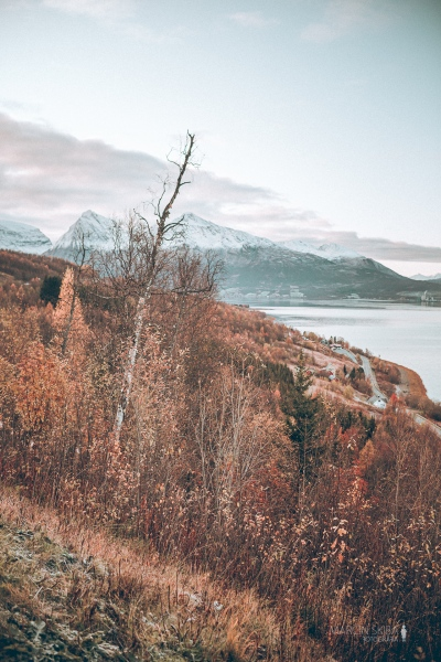 Tromso-Senja-Segla-Aurora-Borealis-150