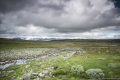 182 Norwegia Hardangervidda