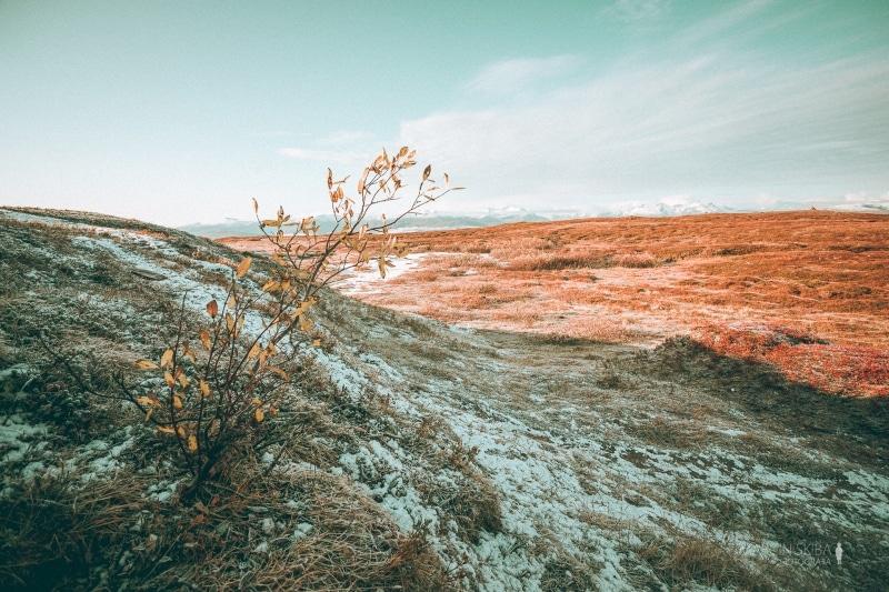 Tromso-Senja-Segla-Aurora-Borealis-40